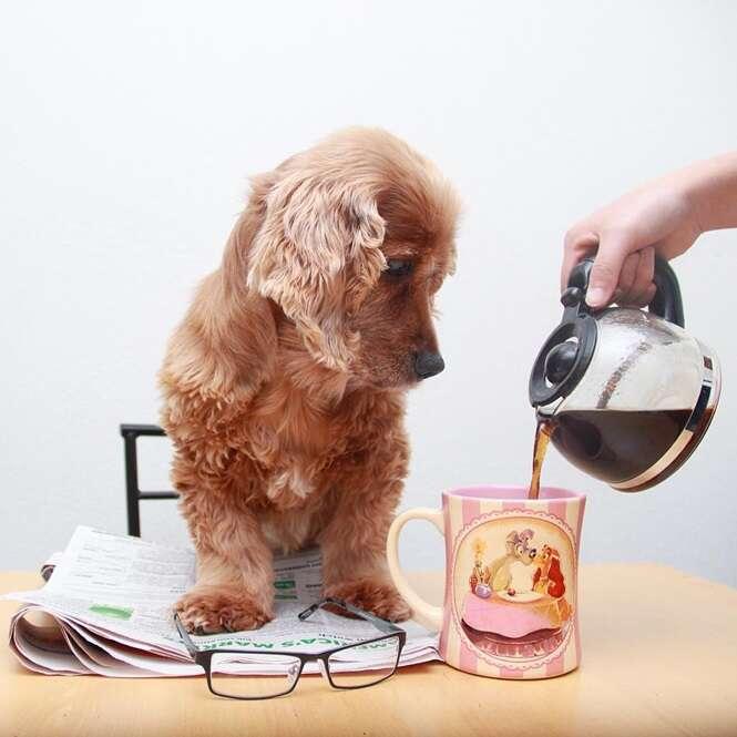 Cães que adoram tomar café