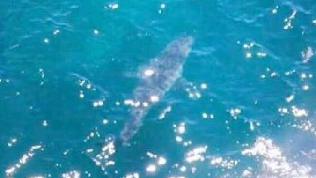 Praia é fechada após tubarão de quase 7 metros ser visto no mar