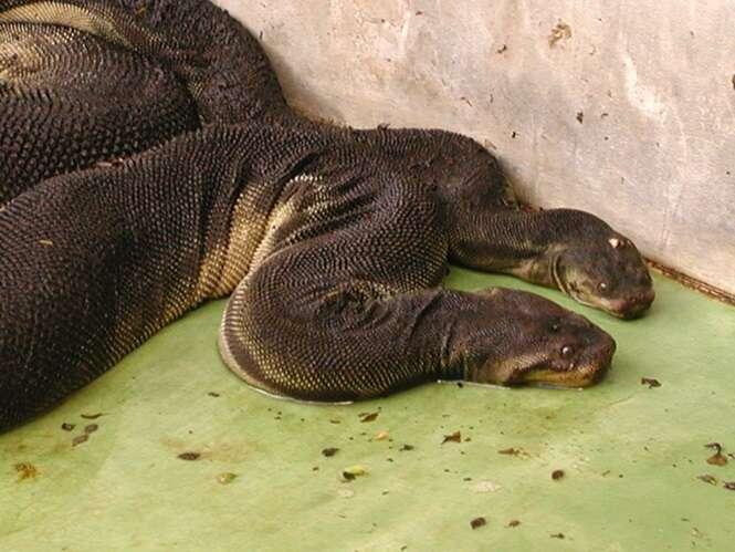 Cobras mais assustadoras e estranhas do mundo