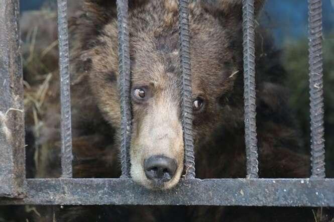 Imagens comoventes mostram animais tristes vivendo em zoológico abandonado