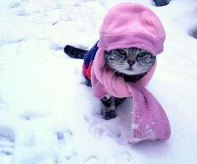 Animais que sabem como encarar o frio