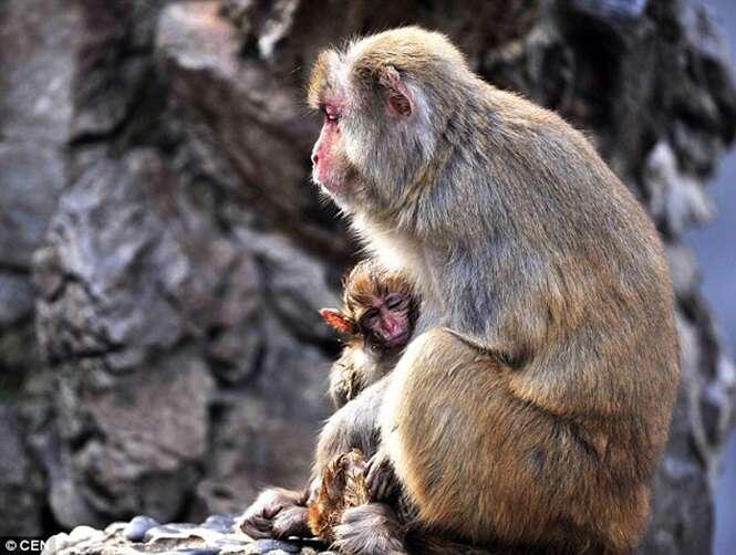 Macaca é flagrada tentando desesperadamente acordar filhote falecido