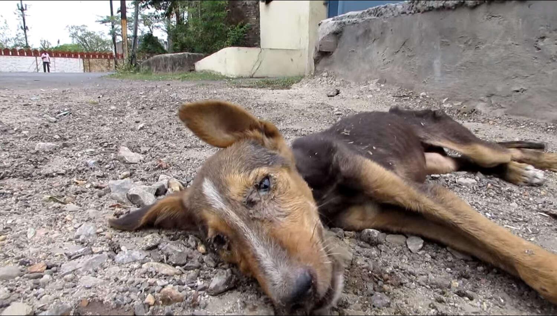 Fonte: Animal Aid