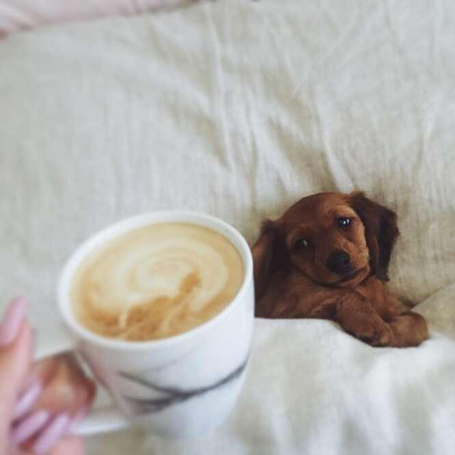 Foto: Instagram: @river_the_mini_dachshund