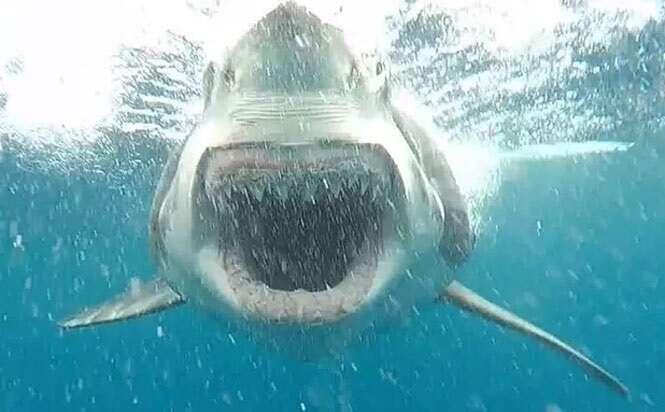 Mergulhador tira foto de enorme tubarão em posição de ataque