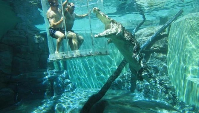 Foto: Crocosaurus Cove Darwin