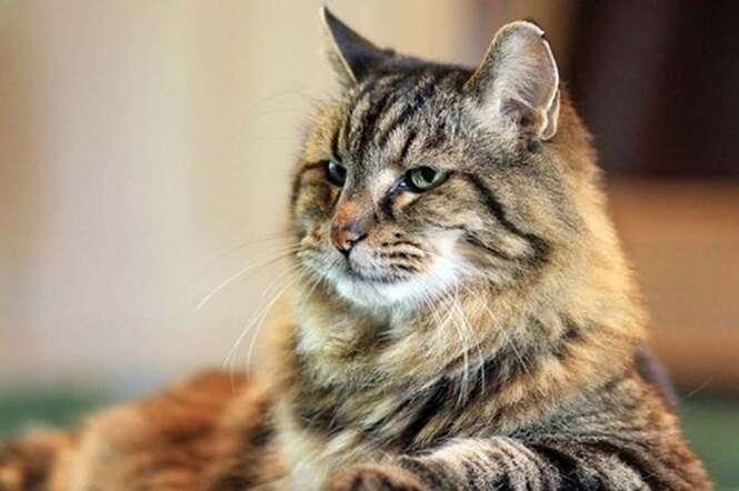 Gato mais velho do mundo surpreende por se manter saudável