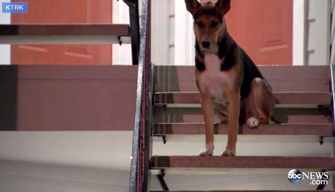Cão é visto sentado do lado de fora de casa duas semanas à espera de seu dono que morreu