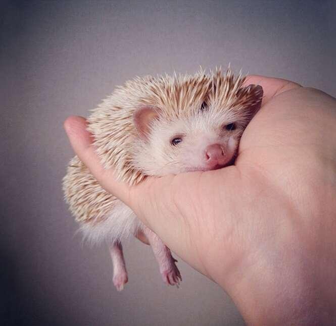 Foto: darcytheflyinghedgehog