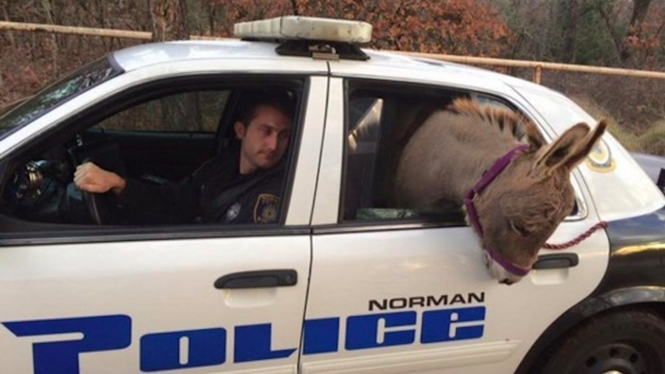 Foto: Norman Police Department