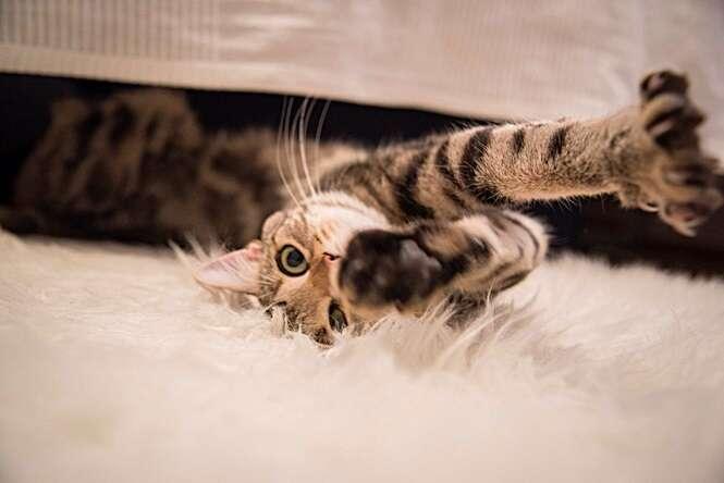 Fotos divertidas envolvendo gatos