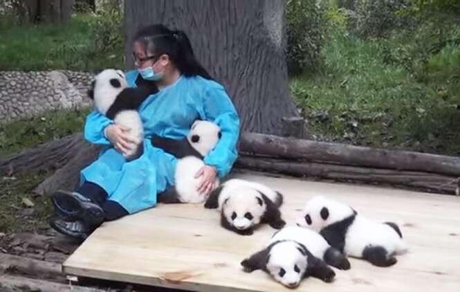 """Mulher ganha 32 mil dólares para passar o dia """"abraçando"""" pandas"""