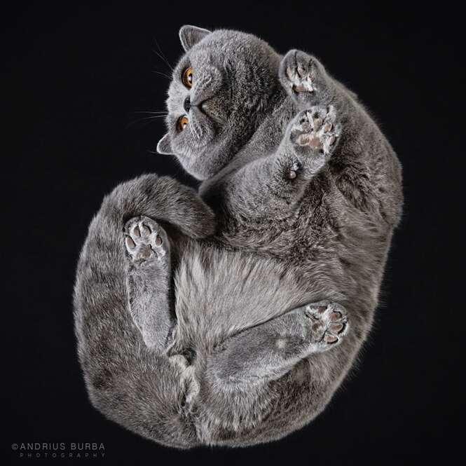 Fotógrafo faz sucesso registrando imagens de gatos vistos por baixo