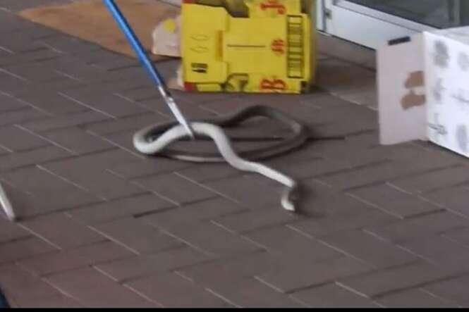 Cobra venenosa que poderia matar um humano em menos de 30 minutos causa pânico em clientes de shopping