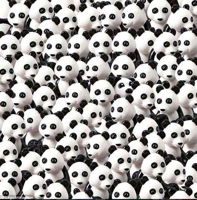 Você consegue encontrar o cão escondido no meio de vários pandas?