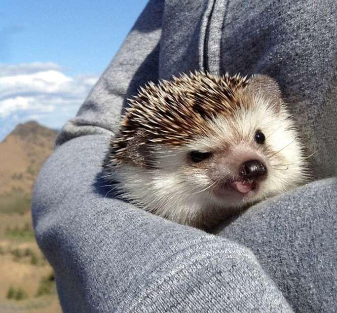 Foto: biddythehedgehog