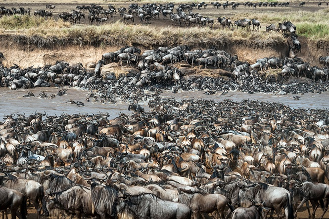 Você consegue encontrar as zebras nesta imagem?