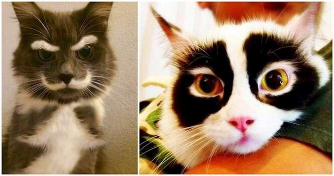 Gatos com uma aparência nada comum