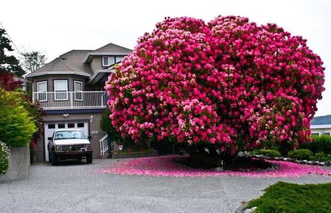 As mais belas árvores do mundo