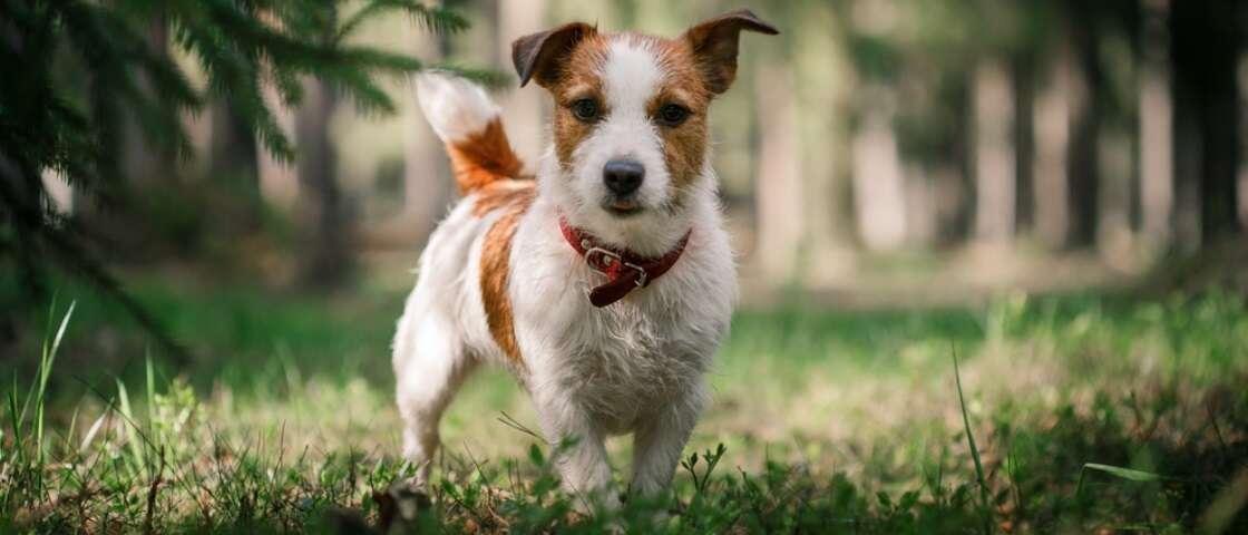 Cachorros mais motivados que você para entrar em forma