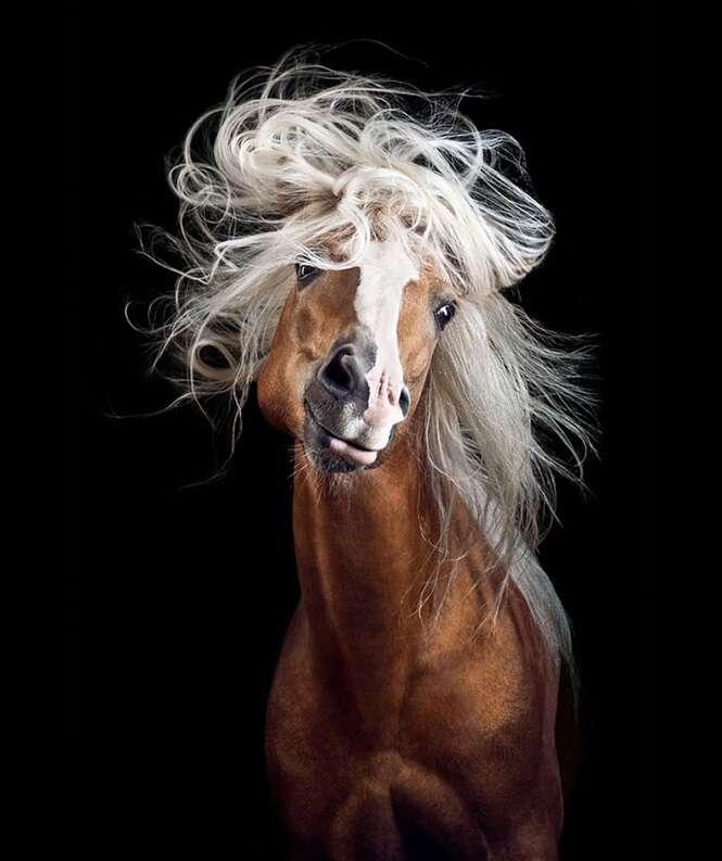 Fotógrafo descobre seu dom registrando imagens diferentes de cavalos.