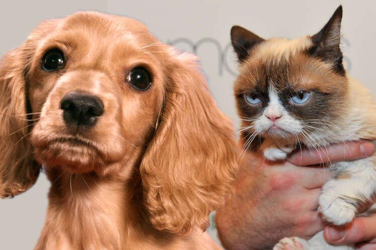 Cientistas comprovam que cães amam seus donos cinco vezes mais que os gatos