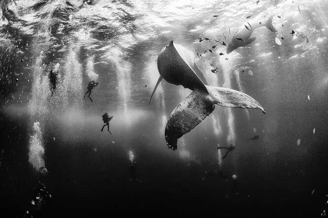 Imagens trazendo a magia das baleias.