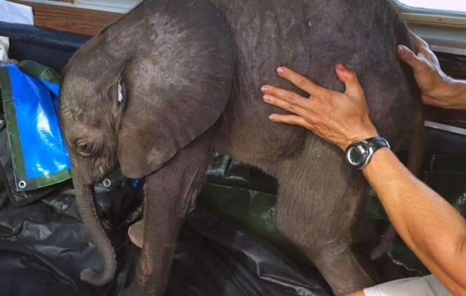 Bebê elefante abandonado ganha nova vida
