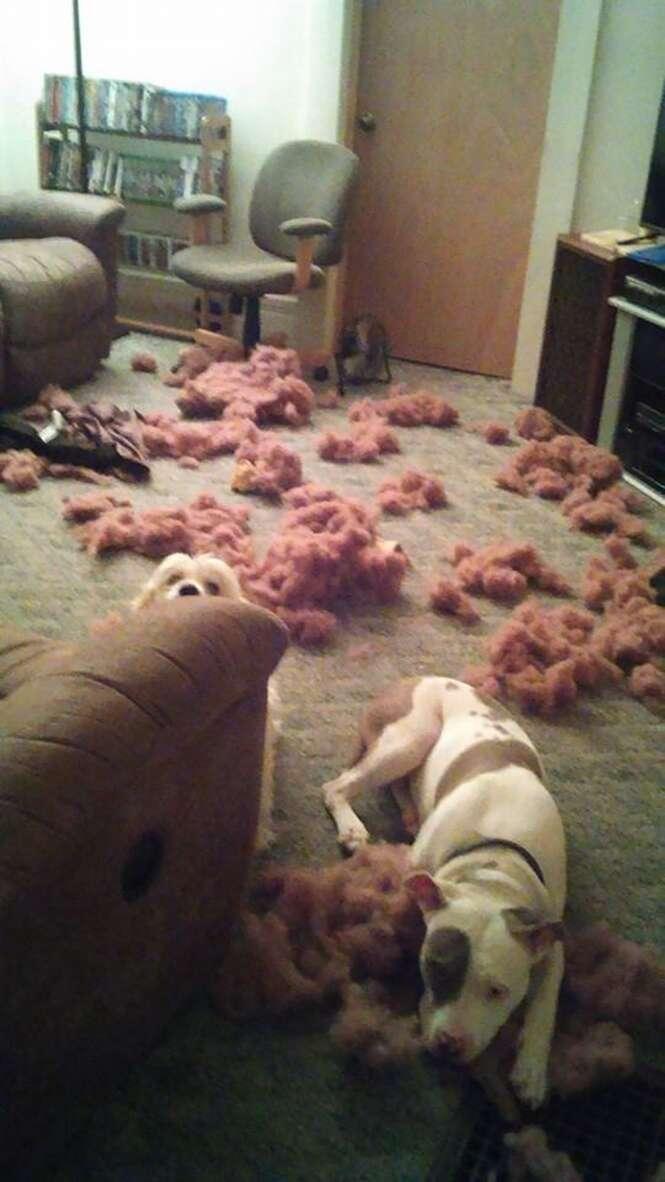 Cães que não conseguem disfarçar a bagunça que fizeram