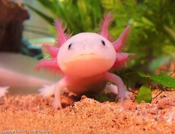 Animais que são rosa por natureza