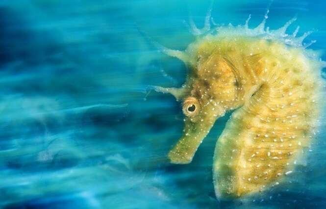 Imagens subaquáticas de um ângulo diferente