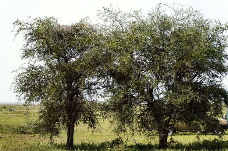 Você consegue encontrar o leopardo escondido nesta imagem?