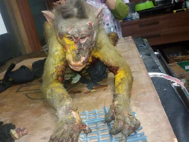 Macaco morre após ter seu corpo encharcado por ácido