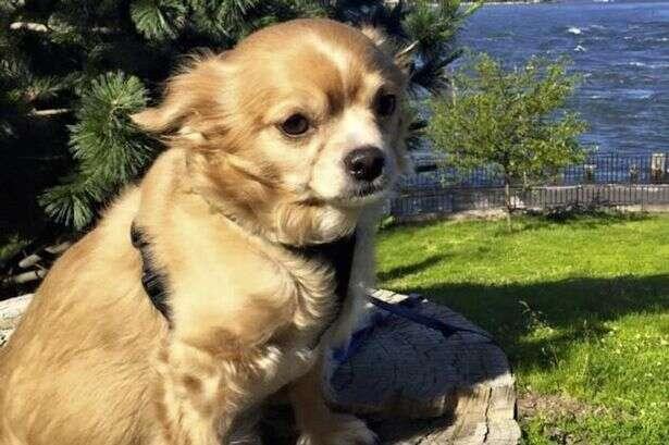 Homem apunhala cão de seu namorado com faca de cozinha após suspeitar de traição