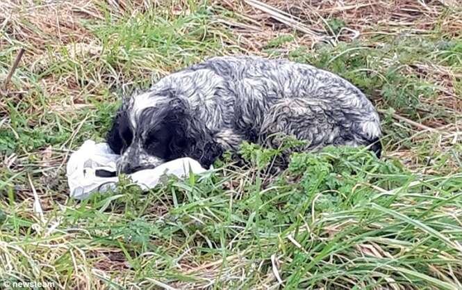 Homem encontra cadela abandonada chorando ao lado de filhotes mortos