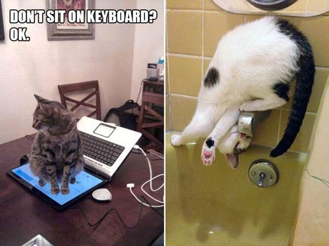 Fotos curiosas provando que gatos são seres nada normais