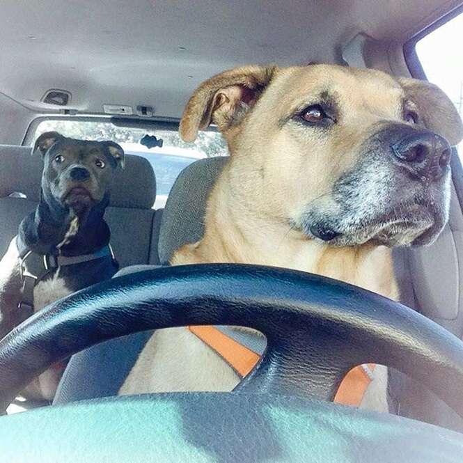 Cães que querem trabalhar