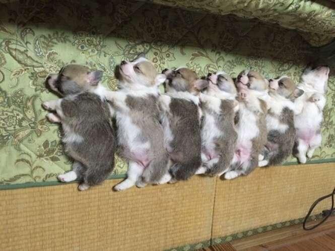 Foto: Hamster Sokuho