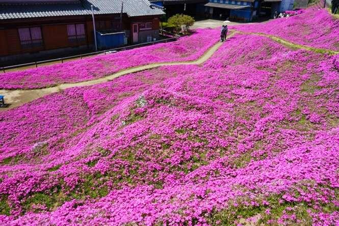 Foto: Shintomi Machiyakuba