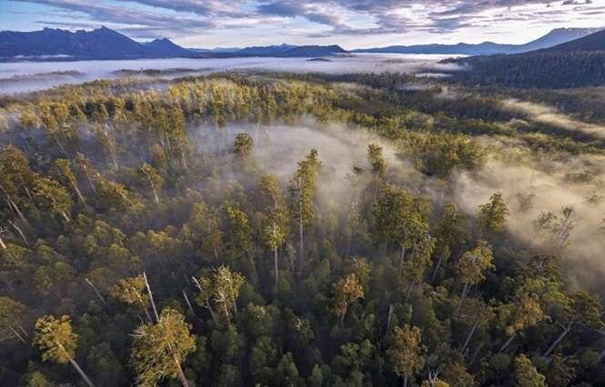 Foto: via sbs.com.au