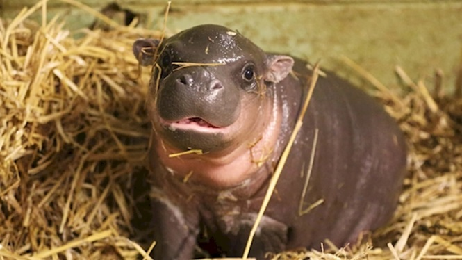 Foto: YouTube / ZSL - Zoological Society of London