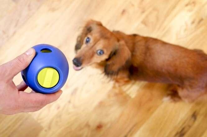 Brinquedinho promete entreter seu cão por um bom tempo