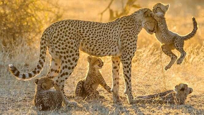 Lindas fotos de mamães e filhotes no reino animal