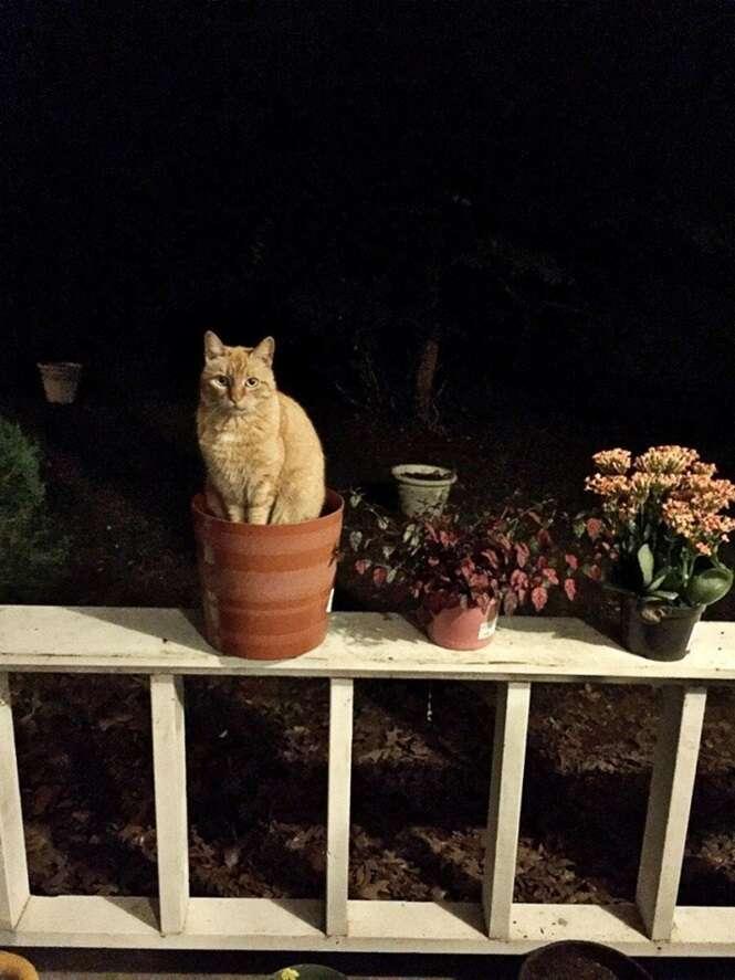 Gatos pensando que são plantas