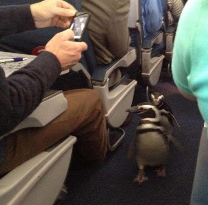Cenas curiosas flagradas durante viagens aéreas
