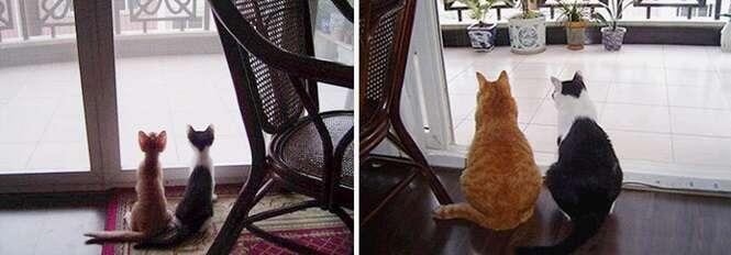 Antes e depois de gatinhos de estimação