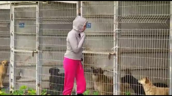 Mulher resgata mais de 250 cães