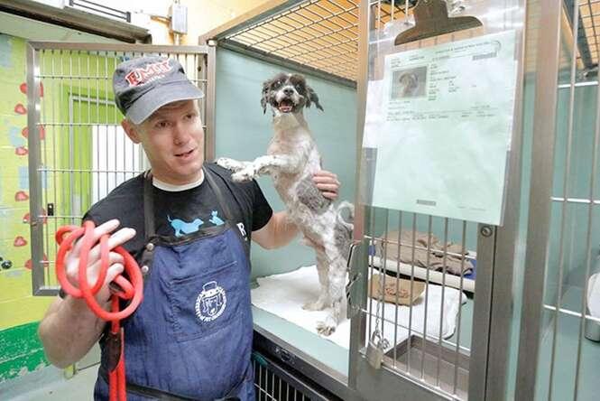 Homem oferece cortes gratuitos a cães de abrigo