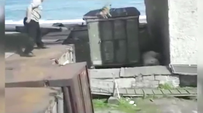 Vídeo chocante flagra homem jogando cão em urso polar para tentar salvar mulher