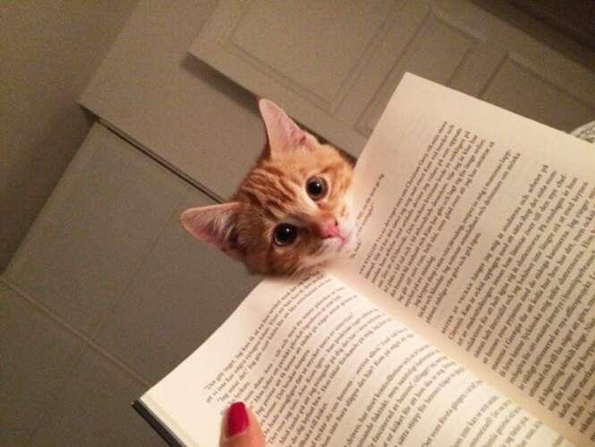 Fotos provando que os gatos não são adeptos à leitura